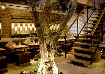 An olive tree grows through both floors of the restaurant.