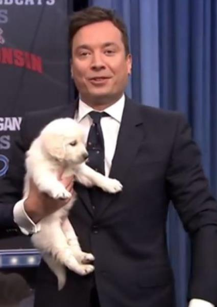 Jimmy Fallon Uses Puppy Powers to Predict NCAA Hoops Champ (watch!) 42