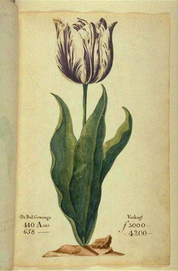 """A tulip, """"the Viceroy,"""" displayed in the 1637 Dutch catalog during the Tulip Mania."""